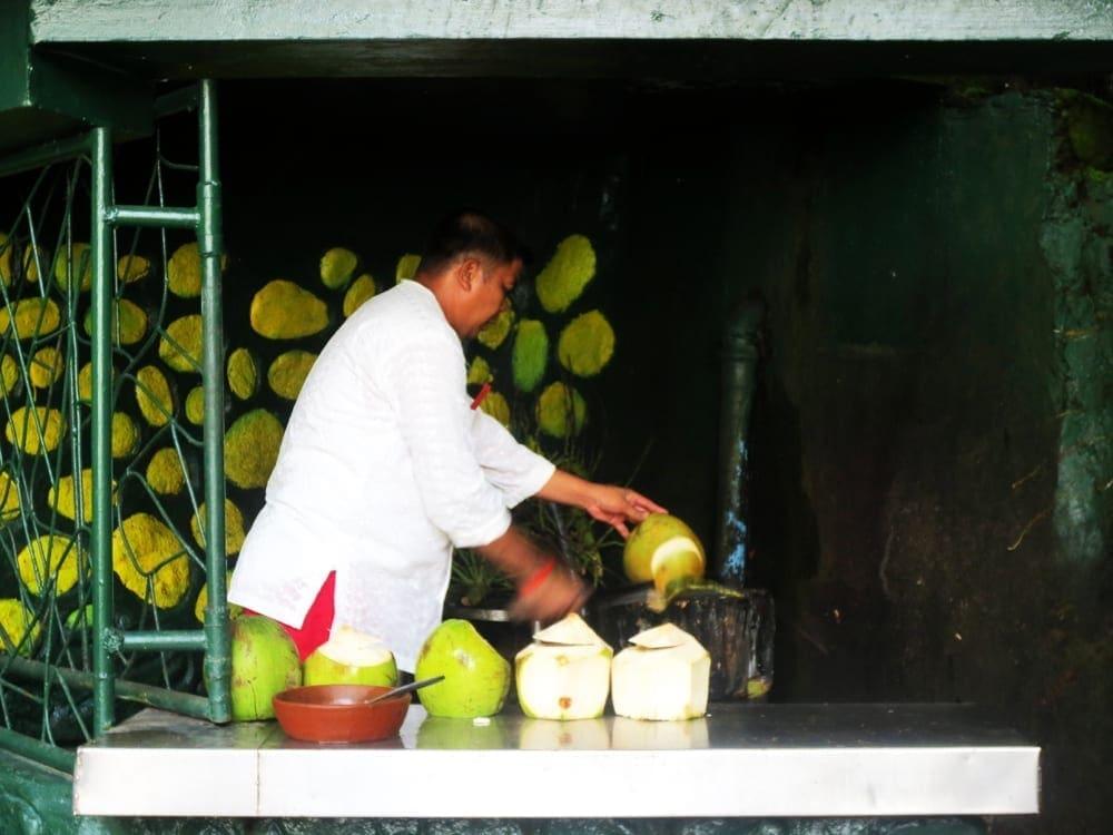Coconut Cutting from Villa Escudero Philippines